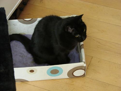 cat in a box | by indigo_jones