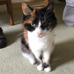 Dis pretty lady :heart_eyes_cat: #catstagram #catsofinstagram