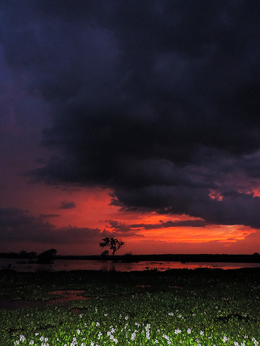 travel ceylon uva uvaprovince wetlands srilanka grasslands southasia asia lake weerawilalake outdoor landscape water sky sunset bright colour purple red blue cloud clouds tree trees serene sea dnysmphotography dnysmsmugmugcom