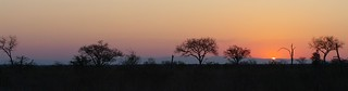 Sunset in the bush - Kruger Pk - South Africa