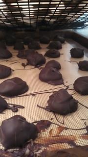Orange-ginger white chocolate truffles
