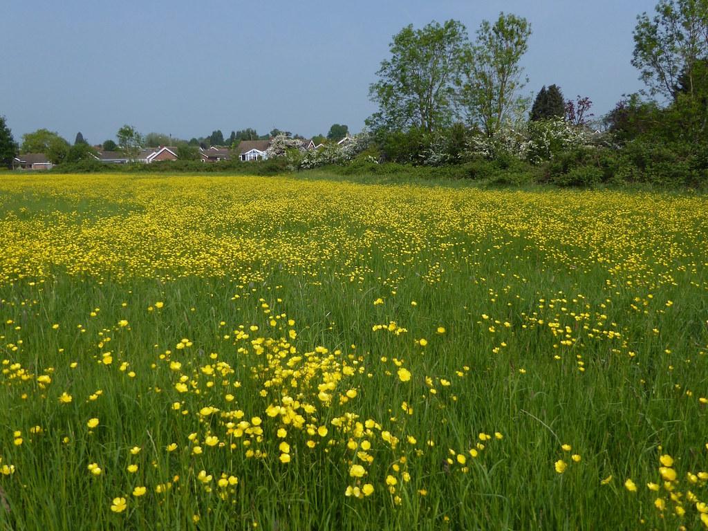 Meadow near the start Thame Circular walk