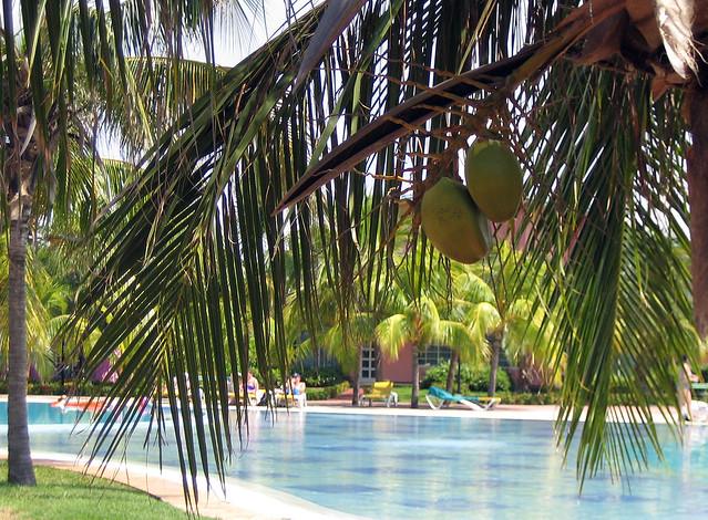 Coconuts - Varadero, Cuba
