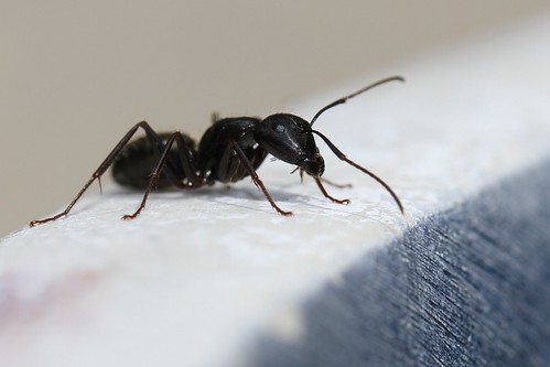 How To Get Rid Of Ants In Walls