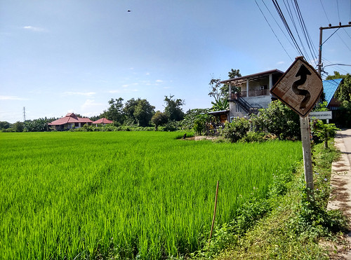 thailand chiangmai ricefield reisfeld paddyfield bearbeitet