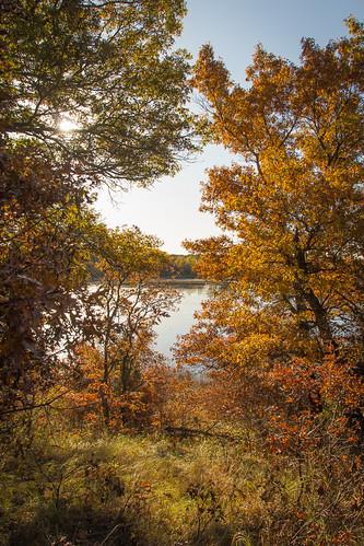 fall leaves minnesota sunrise oak october 2015 oaksavanna uncasdunessna