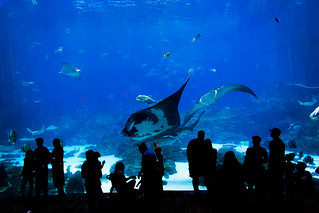 Atlanta Manta | by H_H_Photography
