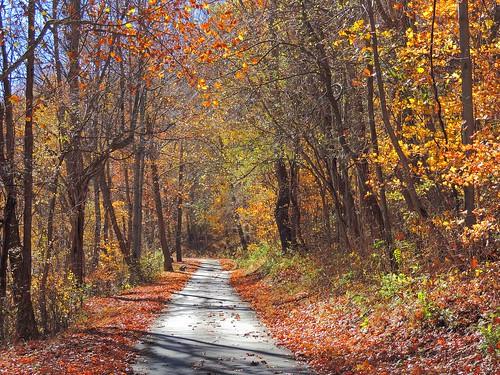 november autumn trees fall nature colorful pennsylvania path gap railstotrails railtrail fayettecounty yrt greatalleghenypassage dunbartownship