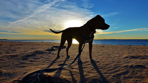 dog beach ocean atlantic westerly rhode island ri walk silhouette sky clouds water sand shadow morning rwgrennan rgrennan ryan grennan nikon d5100 5100 newengland november sunrise sun weekapaug pitt bull