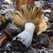 Sortida d´interés micològic (Cultura)(8-11-15)