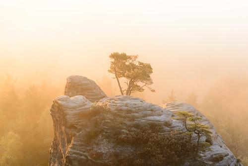 morning winter light mist tree nature fog sunrise de landscape deutschland landscapes haze magic herbst natur foggy sachsen landschaft wald sonnenaufgang goldenhour sächsischeschweiz d600 saxonswitzerland 2485mmf3545g gamrig porschdorf