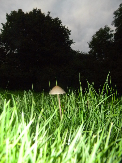 Flashlit fungus Hever to Ashurst