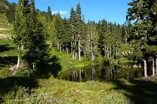 Summer Hiking Trail at Mount Washington, Vancouver Island, British Columbia