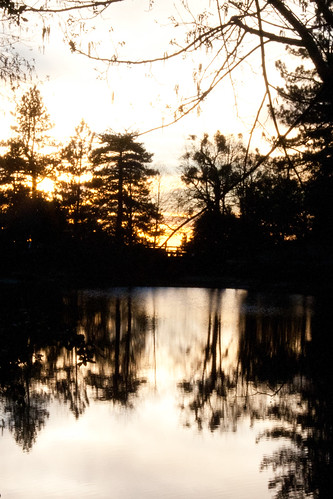trees sunset reflection lakefulmor lakefulmer lauraphotos