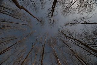 -En la tarde, sinfónicos los vientos tocando están, con un fragor de olas, su instrumental de árboles espesos-