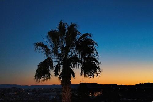 california sunrise palm palmtree daybreak twentyninepalms desertweirdness