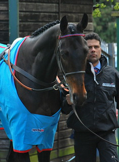 Sprinter Sacre | by Carine06