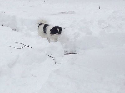 Oliver in a lot of snow