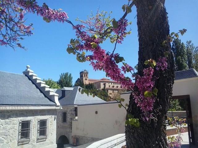 En primavera florece la Real Casa de Moneda