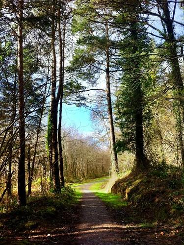 trees ireland irish green nature beautiful woodland landscape scenery track path cork newmarket hdr islandwood iphone4 uploaded:by=flickrmobile flickriosapp:filter=nofilter ilobsterit liscongillwood 2015onephotoeachday