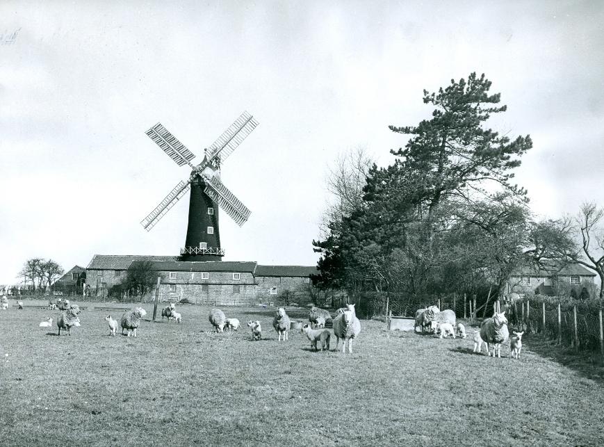 Skidby Mill 1950 (archive ref DDX272-11)