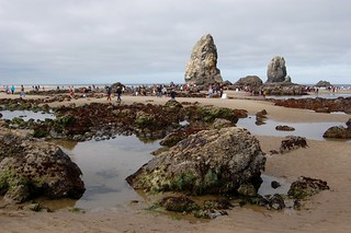 Minus tide at Cannon Beach 2009