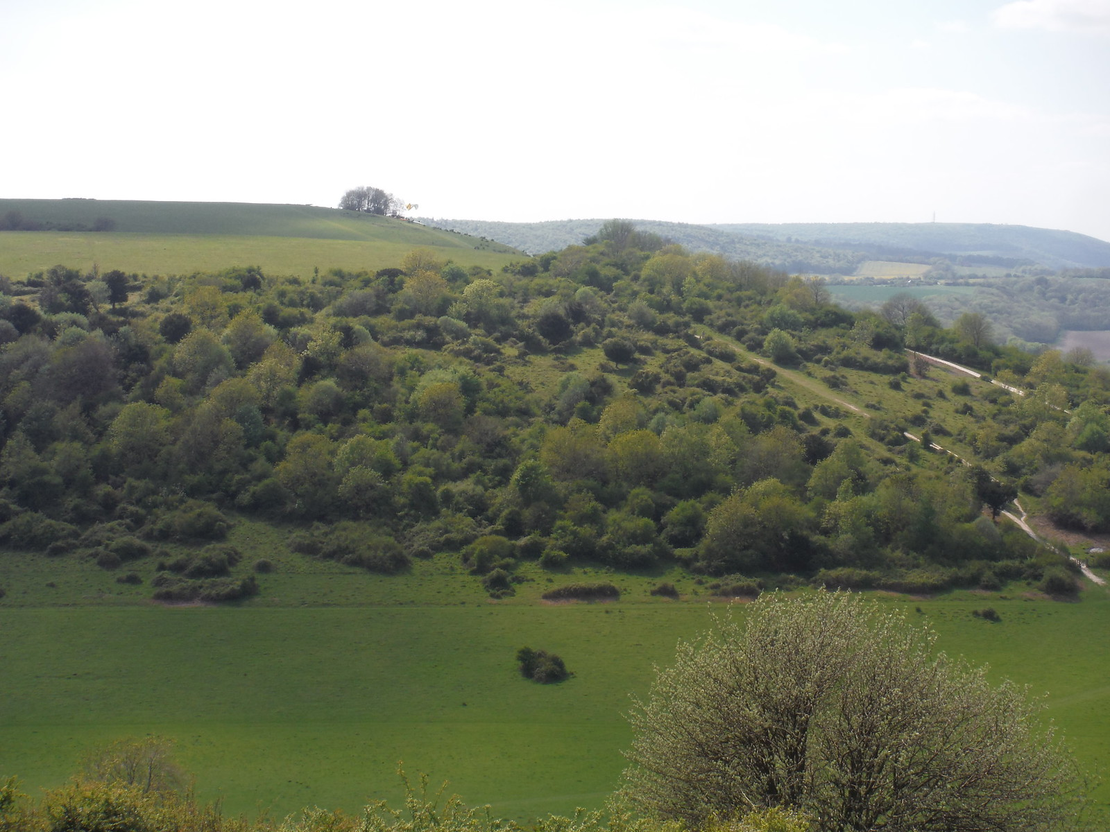 Round Down Hill, Harting Down SWC Walk Rowlands Castle Circular - Extension