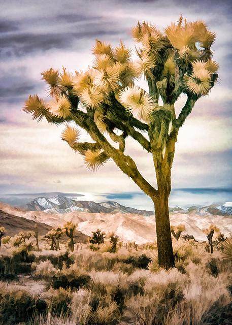 Joshua Tree - Textured Color IR