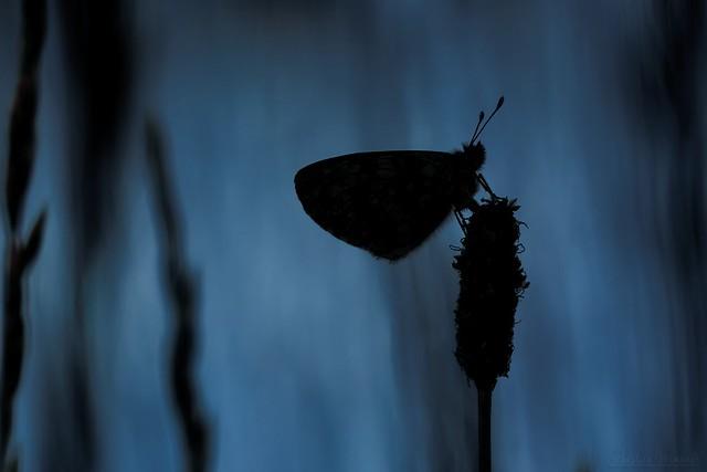 Midsummer Night's Dream - Songe d'une nuit