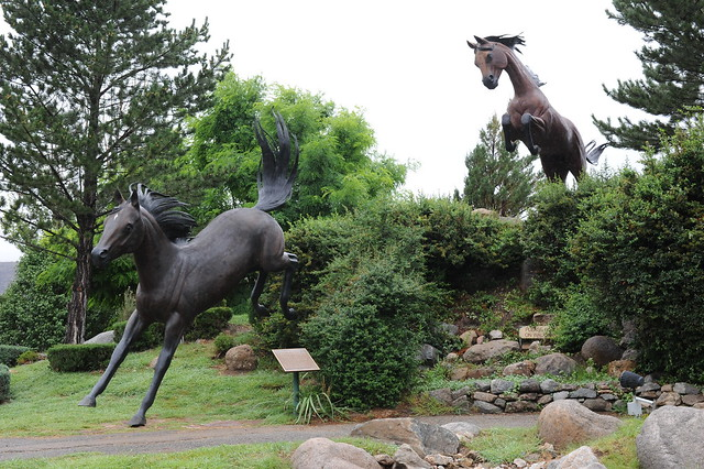 leaping horses