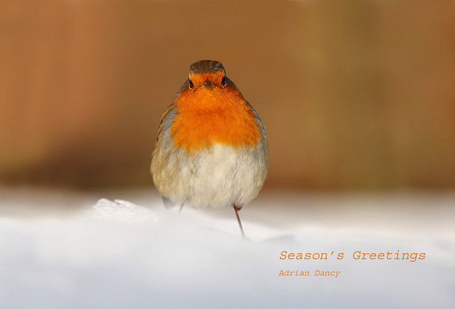 Season's Greetings!  27 December  09 118a copy