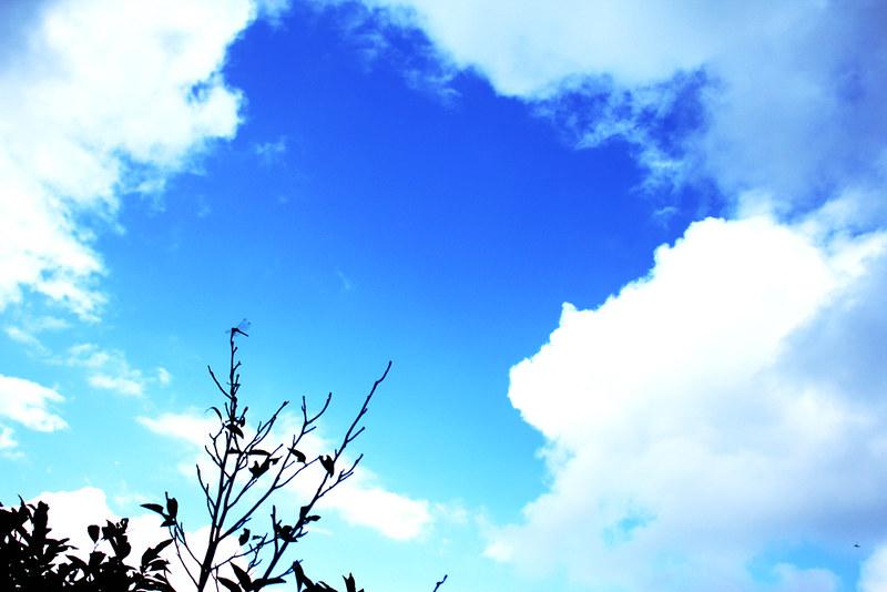 越後駒ケ岳_63