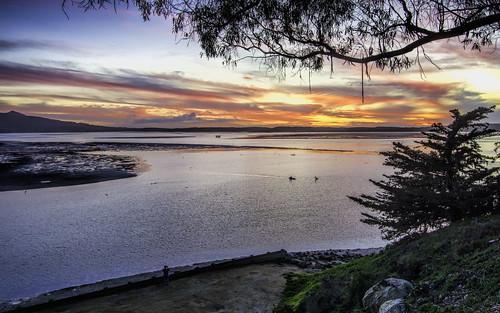 california sunset sky color tree nature silhouette night clouds marina bay morrobay morro morrobaystatepark nikond7100