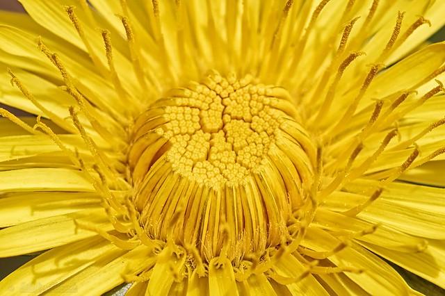 Pollen distributor - Distributeur de pollen
