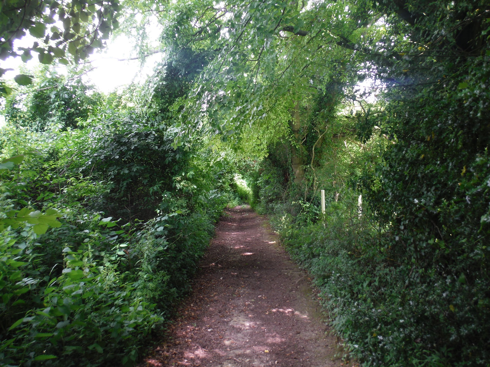 Lane from West Tytherley to Stoney Batter SWC Walk 265 - Dean to Mottisfont & Dunbridge