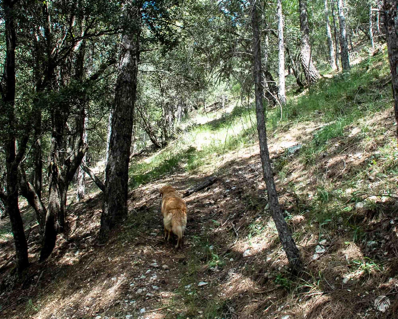 Buscando el paso hacia la Cañada del Avellano y la Pradomira