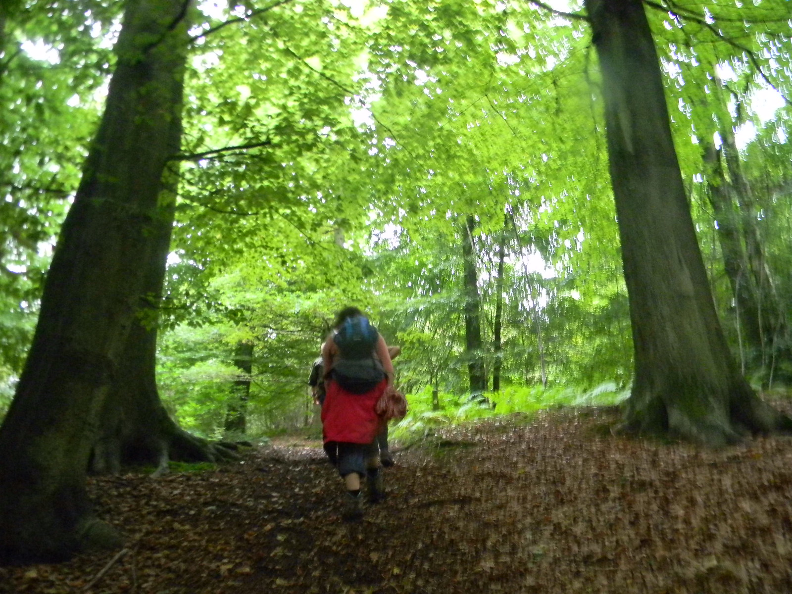 Int he woods Holmwood to Gomshall