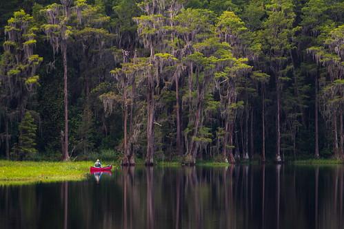 nature landscape fishing florida canoe spanishmoss lakelouise cypresstrees wetland cypressknees lakedixie