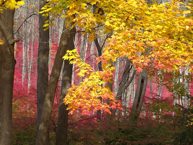 Forest in Color