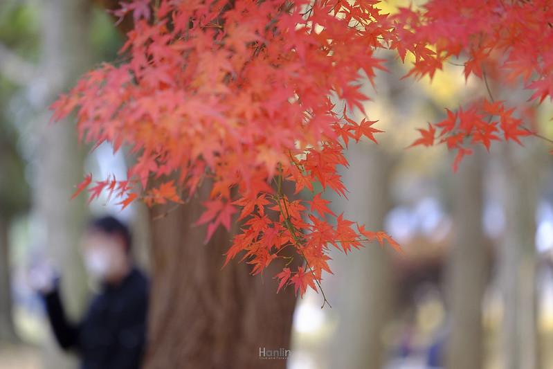 27-DSCF2173-Yoyogi Park