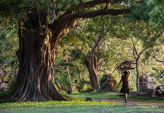 Sri Lanka. Polonnaruwa.