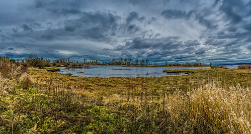 winter panorama canada clouds landscape britishcolumbia pano surrey textures crescentbeach grasses winterwalk lightroom photoshopelements martinsmith tidallagoon nikond7000 topazclarity 7imagepanorama ©martinsmith nikkor1855mmf3556gvrii