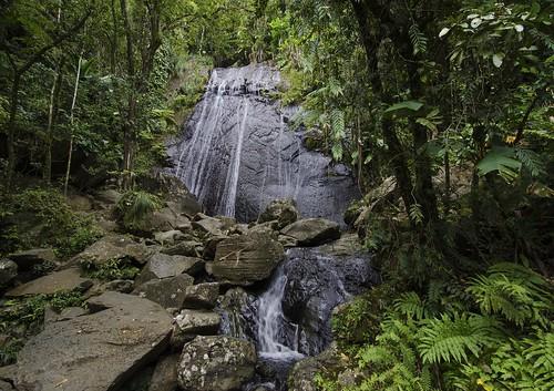 La Coca Fall - El Yunque Rain Forest | by rschnaible