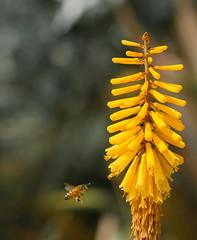 Honey Bee Finding