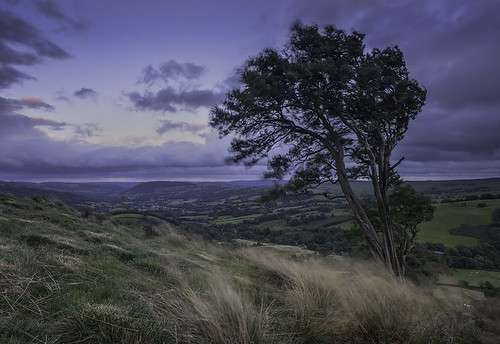 sunset tree grass wales landscape moody cloudy windy valley windswept lonetree carno cledanvalley cledanvalleytipis