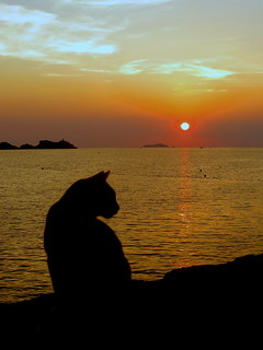 Sunset cat | by Carine06