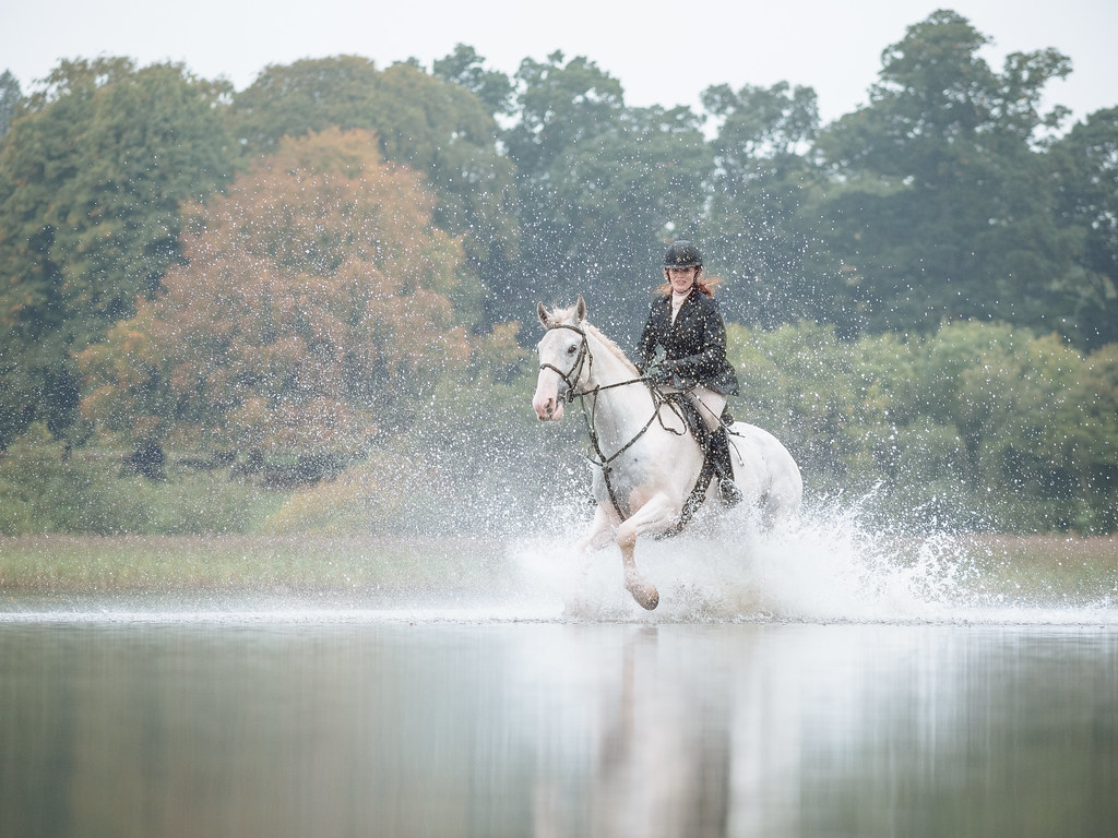 Galloping in Shallow Water