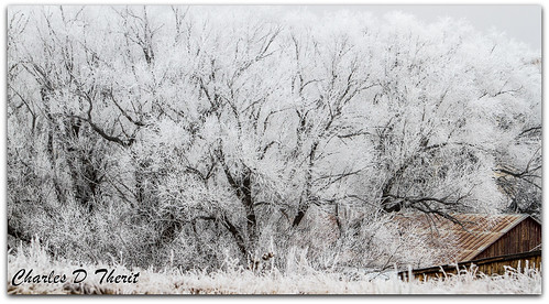 35350mm 7d canon cold colorado coloradosprings cottonwood explore frost ice icy landscape nature snow superzoom tree trees unitedstates usa winter ef35350mm f3556l usm ef35350mmf3556lusm scape america northamerica telephoto infinitexposure co treescape eos eos7d mark1 marki best wonderful perfect fabulous great photo pic picture image photograph esplora explored