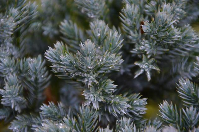 Wintertropfen (a0004548)