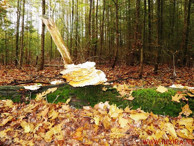 20-10-2012     Wedeblick-   Driebergen        25 Km (113)